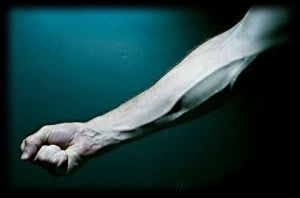 Flickr-arm muscle-davco9200