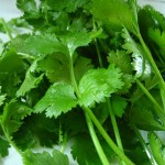Flickr-cilantro-Qfamily
