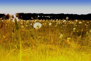 Flickr-field-mindfulness