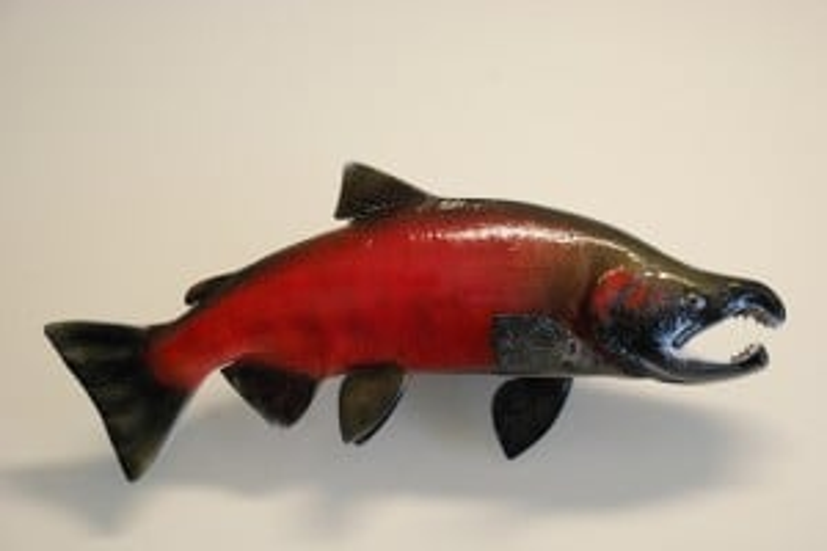 Flickr - Salmon - USFWS Pacific