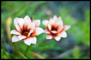 Flickr - Two Flowers - M I T C H Ǝ L L