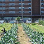 10 Urban Farming Projects Flourishing in Boston