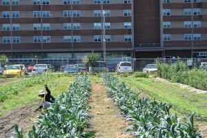 Flickr - Urban Farming - MMW Horticulture Group