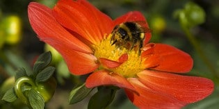 The Co-Evolution of Bees and Flowers: An Electric Symbiosis Not to Be Interrupted with Pesticide Chemicals