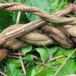How Ayahuasca Can Revolutionize Psychotherapy