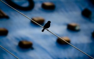 Flickr - Bird On A Wire - NJ..