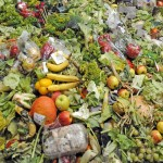 Half of the World's Food Is Thrown Away