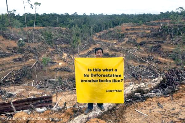 Action At Procter and Gamble Palm Oil Supplier in Central Kalimantan