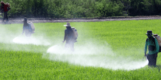 The 'Big 6′ Chemical Companies Now Make 50,000 Different Pesticides