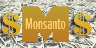 Big Win! Monsanto Reports $156 Million Loss in Q4 as Farmers Abandon GM Crops