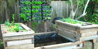 Practical Aquaponics for Growing Nutritious Vegetables