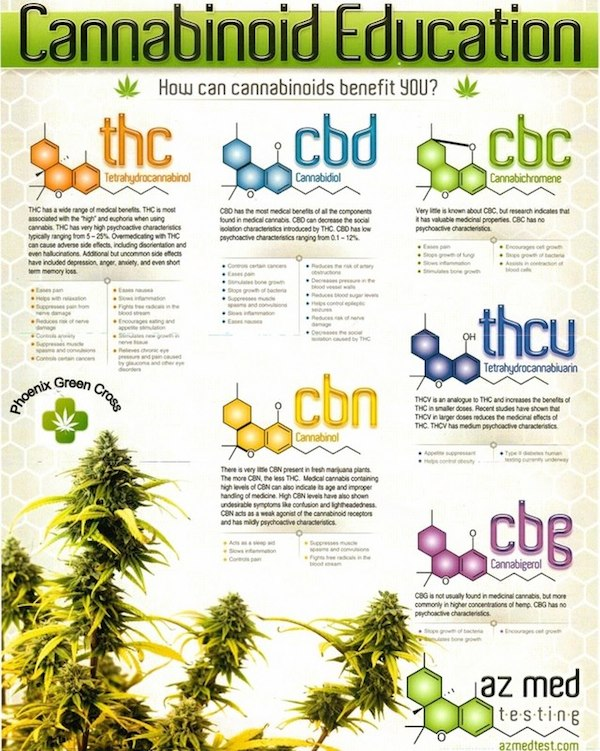 cannabinoid-education