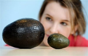 giant-avocado_2022543b