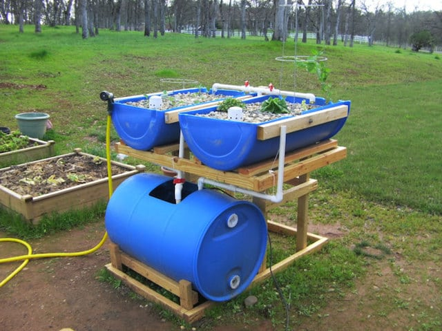 5 tips to help you get started with aquaponics for Aquaponics pond design