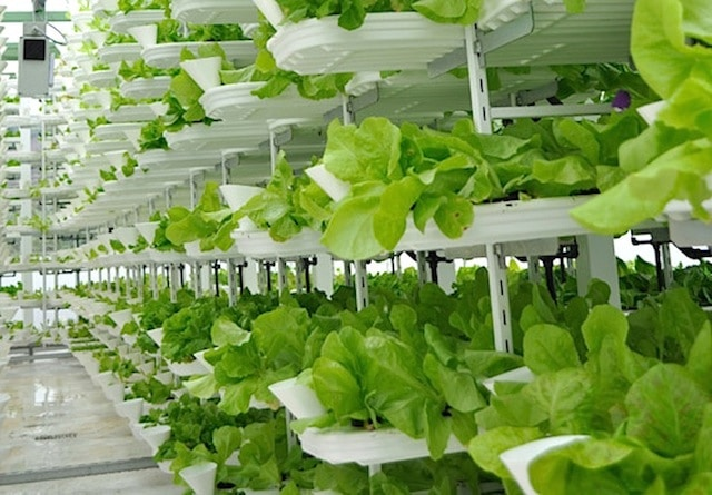 The Crop Yields Found in Vertical Farming Will Blow Your Mind
