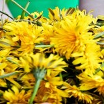 8 Health Benefits of Dandelions