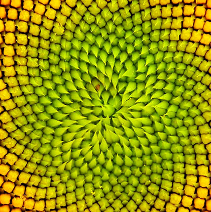 15 PLANTS THAT TEACH US SACRED GEOMETRY Sgpic15