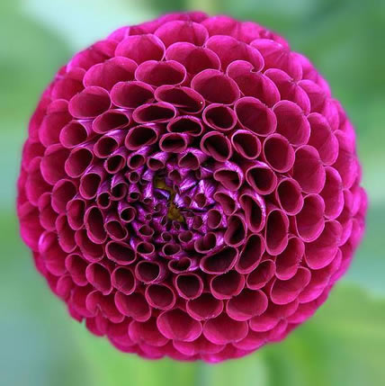 15 PLANTS THAT TEACH US SACRED GEOMETRY Sgpic4