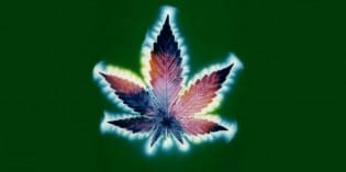 Cannabis Represents the Divine Feminine in the Patriarchal Oligarchy