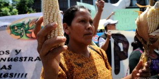 Indigenous Mayans Win Stunning Repeal of Hated 'Monsanto Law'