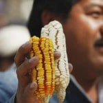 Indigenous Activists Win Major Court Rulings Against Monsanto in Mexico