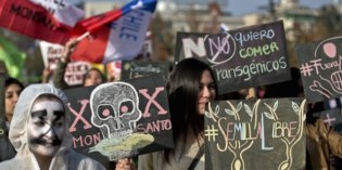 Argentina Rises Up Against Monsanto's Toxic Transgenic Seeds