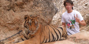 Official Rescue of Tigers Underway at Thailand's World Famous Selfie Temple