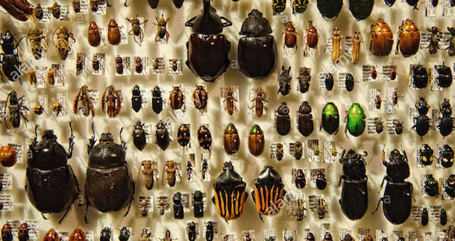 Insects on Display