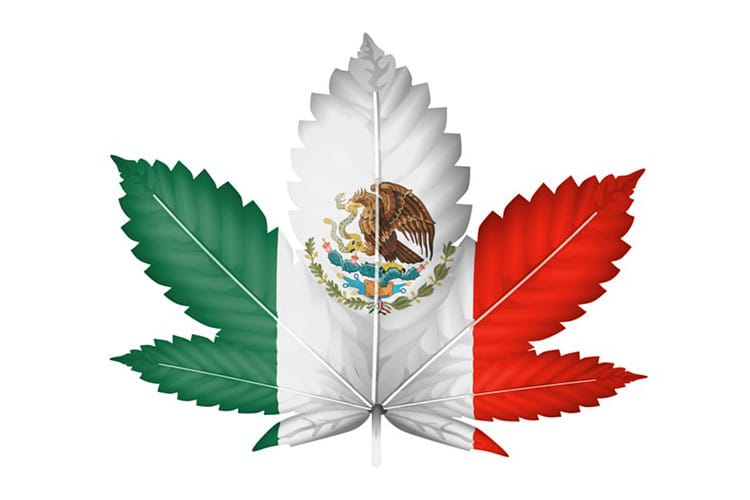 https://www.wakingtimes.com/wp-content/uploads/2017/12/Mexico-Marijuana.jpg