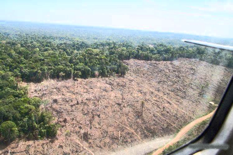 The world lost an area of tropical forest the size of ...