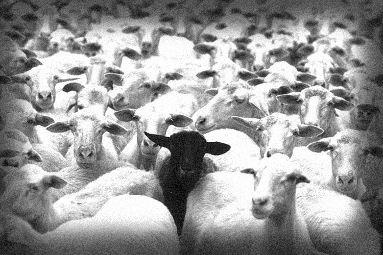 https://www.wakingtimes.com/wp-content/uploads/2018/11/Sheeple-Black-Sheep.jpg