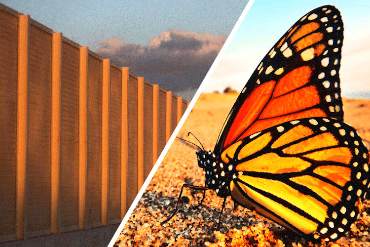 Monarch Butterfly Border Wall