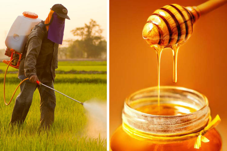 99% of Canadian Honey Analyzed Contaminated with Herbicide Glyphosate