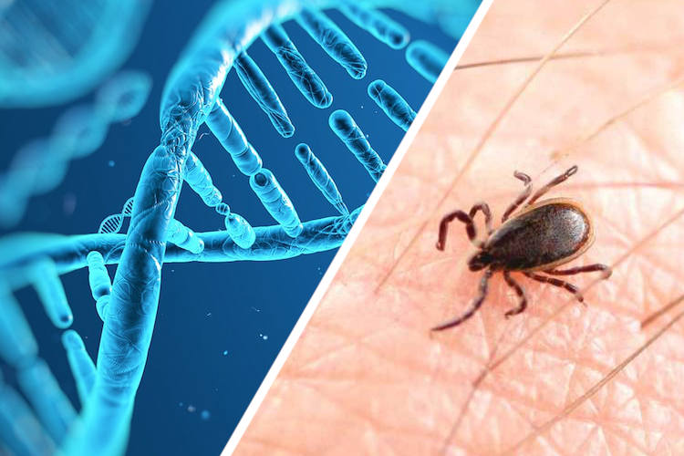 Lyme Disease: The CDC's Greatest Coverup & What They Don't Want You To Know