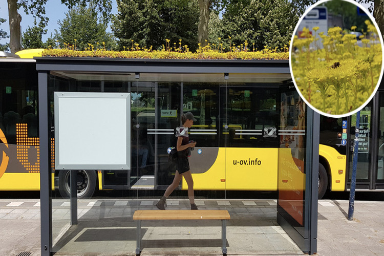 This City Turned Its Bus Stops Into 'Bee Stops' - and It's the Best Thing Ever
