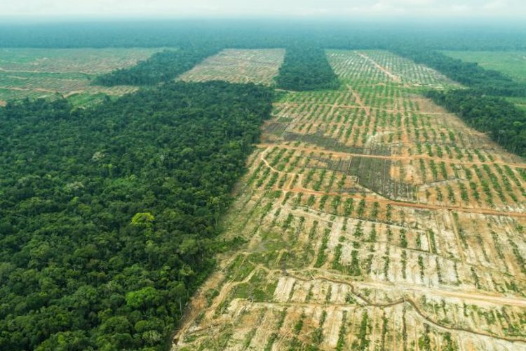 'Huge Win for Wildlife' – Peru Vows to End Deforestation Driven by Palm Oil