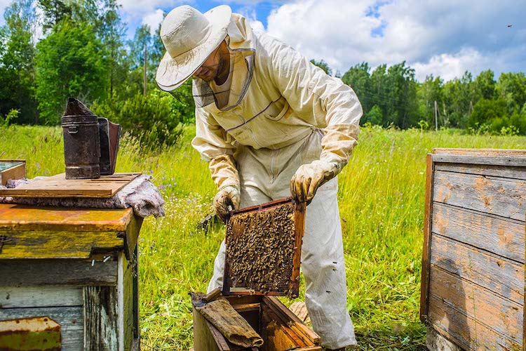 US Beekeepers File Lawsuit Against EPA Over Approval Of Dangerous Pesticide