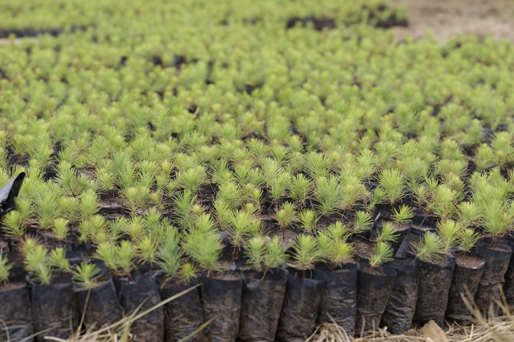 Madacascar Is Planting 60 Million Trees in Ambitious Drive Inspired by Its President