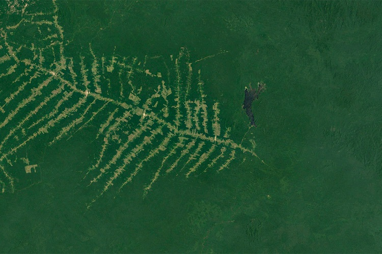 Deforestation in Brazil continues torrid pace into 2020