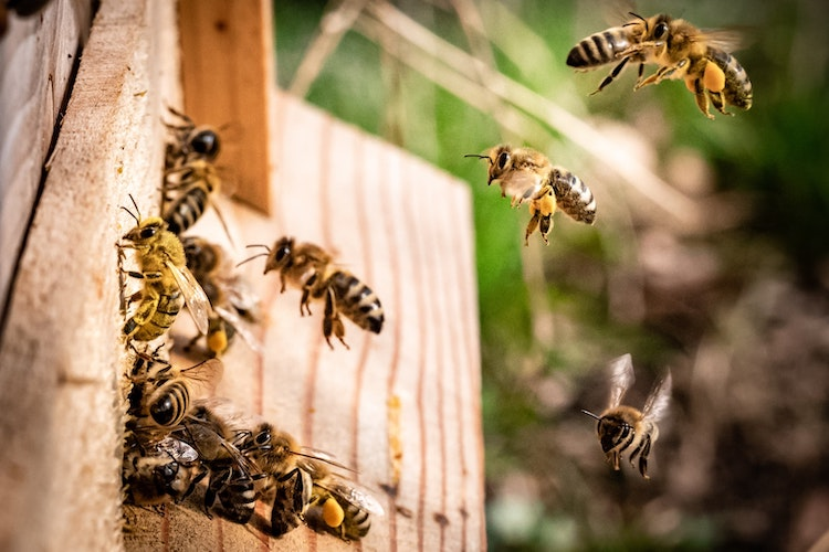 Bees, Bee Hive